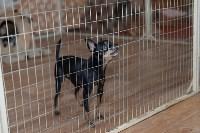 Выставка собак DogLand, Фото: 20