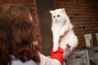 Выставка кошек в Искре, Фото: 90