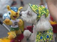 Собачий карнавал, Фото: 3