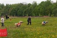 В Туле состоялись собачьи бега, Фото: 2