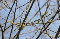 Краски весны в Туле, Фото: 40