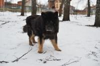 В Центральном парке прошёл рейд по выявлению нарушений выгула собак, Фото: 9