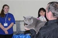 В Туле прошла международная выставка кошек, Фото: 26
