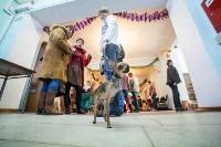 Выставка собак в Туле, 29.11.2015, Фото: 41