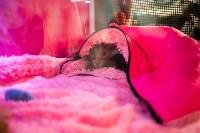 Пряничные кошки, Фото: 61