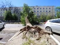 Упавшее дерево перекрыло ул. Болдина, Фото: 6