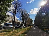 В Туле гибнут деревья, Фото: 55