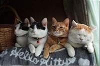 Самый ленивый кот, Фото: 5