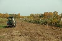 Высадка деревьев на территории бывшей судаковской свалки, Фото: 6