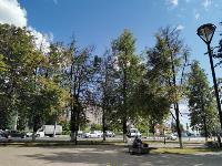 В Туле гибнут деревья, Фото: 48