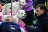 Выставка собак в Туле, Фото: 85