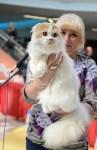 """Выставка """"Пряничные кошки"""" в ТРЦ """"Макси"""", Фото: 70"""