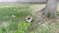 Туляки: «Посетители миграционного центра спят на газонах в нашем дворе и ходят в туалет», Фото: 3