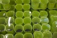 Леруа Мерлен: Какие выбрать семена и правильно ухаживать за рассадой?, Фото: 2