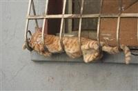 Спящие коты, Фото: 10
