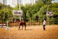 Новые лошади для конной полиции в Центральном парке, Фото: 10