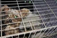Похищенные собаки, Фото: 30