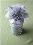 Жидкие коты, Фото: 7