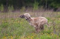 В Туле состоялись собачьи бега, Фото: 12