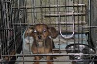 Похищенные собаки, Фото: 13