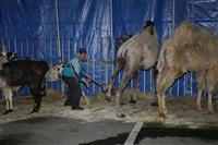 Цирк огромных зверей. Тула, Осиновая гора, 1, Фото: 18