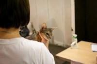 Пряничные кошки, Фото: 35