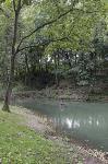Туляки сообщают о массовой гибели уток в Платоновском парке, Фото: 10