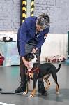 Выставка собак в Туле 26.01, Фото: 35