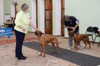 """Выставки собак в ДК """"Косогорец"""", Фото: 14"""