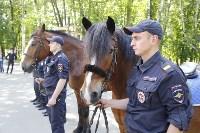 Конный патруль в Туле, Фото: 7