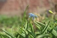 Краски весны в Туле, Фото: 17