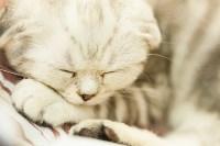 """Выставка """"Пряничные кошки"""". 15-16 августа 2015 года., Фото: 99"""