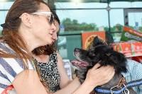 В тульском «Макси» прошел благотворительный фестиваль помощи животным, Фото: 33