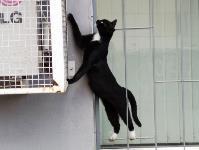 Тульские котики, Фото: 28