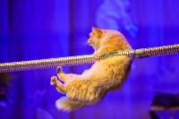 Театр кошек в ГКЗ, Фото: 68