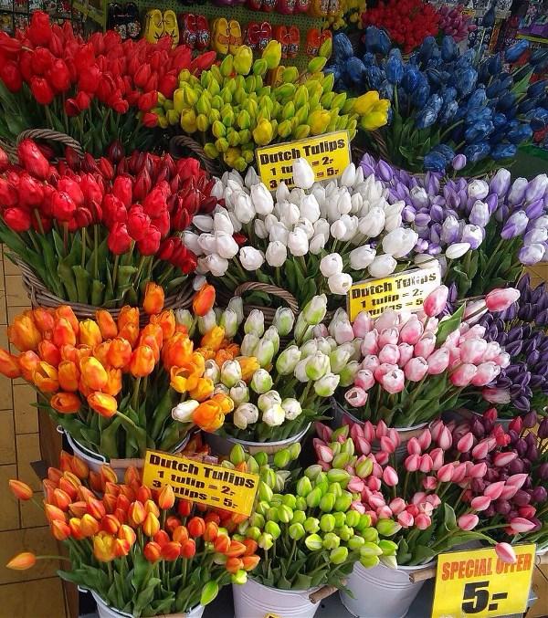 Амстердам. Цветочный рынок.
