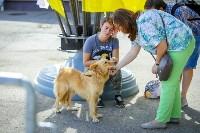 В Центральном парке Тулы проходит фестиваль помощи животным, Фото: 27