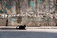 Тульские котики, Фото: 73