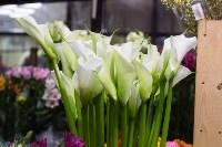 Ассортимент тульских цветочных магазинов. 28.02.2015, Фото: 43