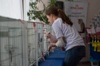 Выставка кошек в ГКЗ. 26 марта 2016 года, Фото: 16