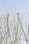 Зимняя сказка Платновского парка, Фото: 25