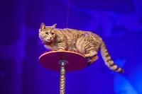 Театр кошек в ГКЗ, Фото: 69