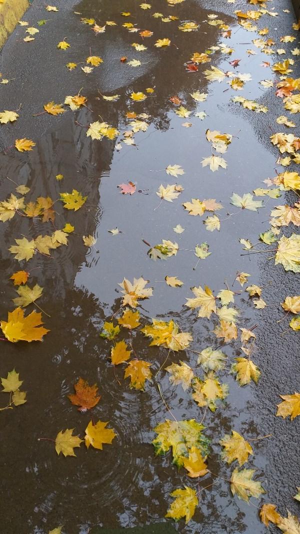 Когда капли дождя попадают в лужу, получаются круги