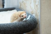 Экзотические животные в квартире, Фото: 12