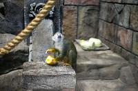 Тульский экзотариум: животные, Фото: 52