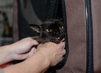 Выставка кошек в Туле, Фото: 35