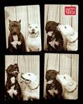 Собаки в фотобудке, Фото: 2