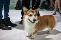 Выставка собак в Туле, Фото: 63