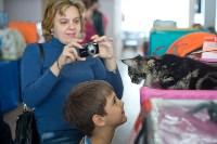 Выставка кошек в ГКЗ. 26 марта 2016 года, Фото: 93