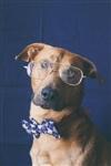 Собачья мода, Фото: 4